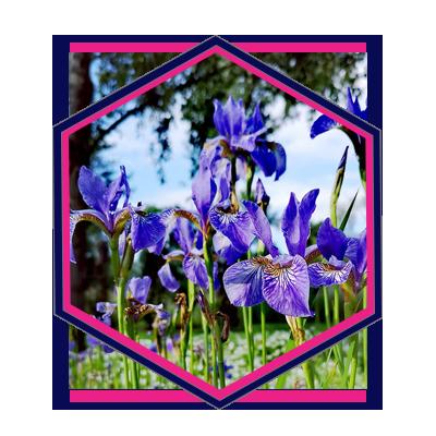 10, Pure Marketing - Landscape Gardener Marketing Agency HX